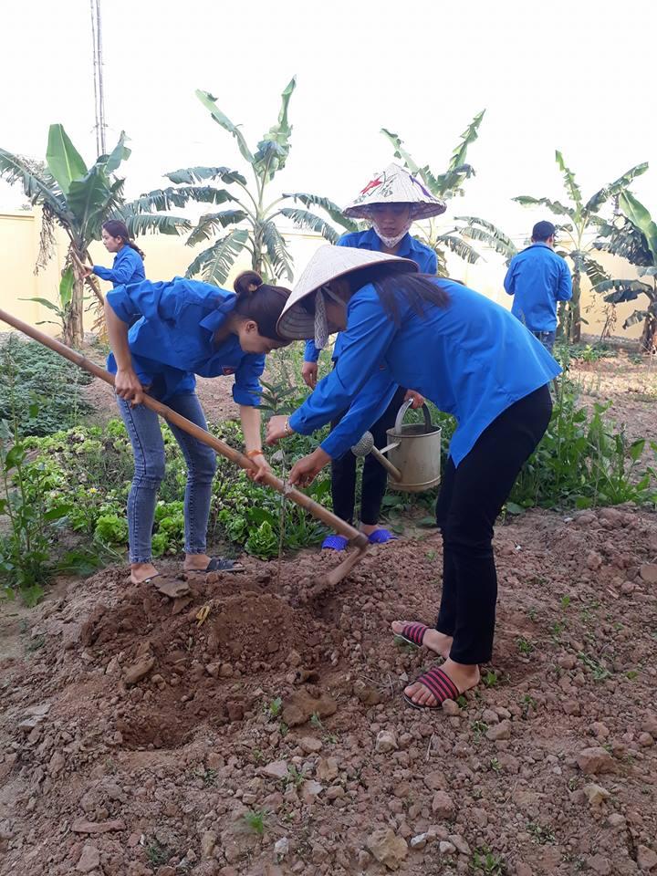 Trồng cây tạo cảnh quan môi trường nhà trường